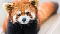 GW(ゴールデンウィーク)に子どもと行きたい都内の動物園