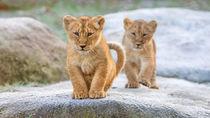 年始のおでかけにおすすめ!お正月から営業している静岡県の動物園
