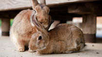兵庫周辺のさまざまな生き物を飼育している動物園