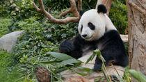 冬にお出かけしたい、兵庫の動物園。イベントや人気の動物など