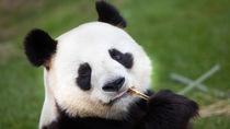 GW(ゴールデンウィーク)に行きたい兵庫県の動物園。子どもといっしょに連休を満喫しよう