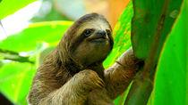 親子のおでかけにおすすめ!大阪周辺のさまざまな生き物を飼育している動物園