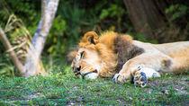 静岡県の動物園に遊びに行こう。親子で夏休みを満喫できるおすすめのスポット