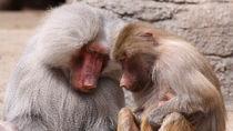 静岡県で猿に会える動物園。いろんな種類の猿に会いにいこう