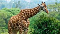 キリンに会える都内周辺の動物園。大きなキリンを子どもと見に行こう