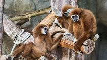 家族のおでかけにおすすめ!長野で猿に会える動物園