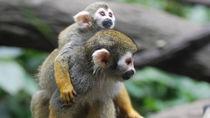 親子のおでかけにおすすめ!神奈川周辺で猿に会える動物園