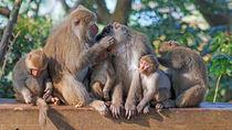 都内にあるさまざまな種類の猿と出会える動物園