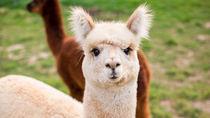 子どもとのお出かけにおすすめ!ママ目線で選ぶ岡山周辺の動物園
