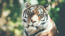 岡山周辺のさまざまな種類の動物を飼育している動物園