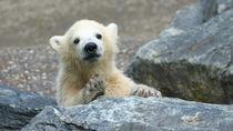 親子ででかけよう!東京でイベントを開催している動物園
