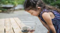 金魚やザリガニ、熱帯魚など生き物を育てる水槽掃除の手順とコツ