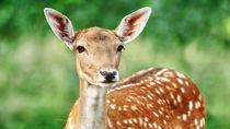 横浜周辺で鹿に会える動物園。休日のお出かけを家族で楽しもう