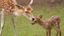 神奈川県周辺の動物園へ、さまざまな種類の鹿を子どもとといっしょに見に行こう