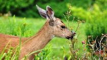東京周辺で鹿に会える動物園。動物を間近で見る体験を親子で楽しもう