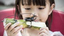 カブトムシの餌は何をあげればよい?餌の作り方や餌台、あげるときのコツなど