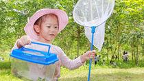 子どもと昆虫採集するために必要な道具は?服装や採集場所、ライトトラップの方法など