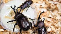カブトムシ採集におすすめのゼリー。味や形状などの選び方や代用の仕方、ゼリーでの捕獲方法