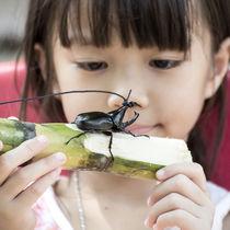 カブトムシのオスやメス、幼虫の持ち方。子どもでもできる持ち方とは。