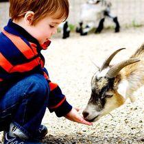 ふれあいが楽しめる動物園まとめ。見る以上の感動体験を子どもたちに!