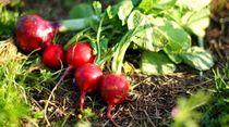 無農薬と有機のちがいとは?子どもの「食育」の前に、大人が知るべき野菜の選び方