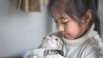 一人っ子世帯がペットを飼うことについて考える。猫や犬、小動物など