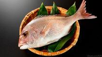 離乳食に鯛を取り入れよう。時期別の進め方と目安量やアレンジ方法