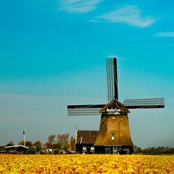 【オランダの子育て】働き方改革で得た理想のワークライフバランス