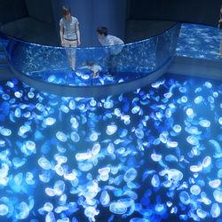 7月16日(木)「すみだ水族館」に2つの新エリアがオープン