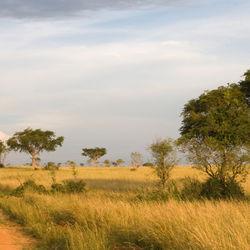 【ウガンダの子育て】オープンに開かれた大規模な「家族」の形