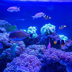 旅行や家族のお出かけに行きたい、北海道で夏休み期間にイベントがある水族館。