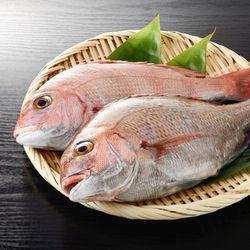 離乳食後期の鯛レシピ、ママたちの工夫や冷凍方法などを紹介