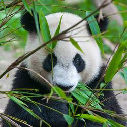 夏休みに子どもと行きたい都内の動物園。1日通して楽しめる動物園を満喫