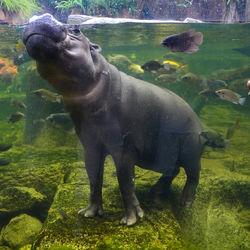 夏休みに子どもと行きたい横浜周辺の動物園で楽しい思い出を作ろう