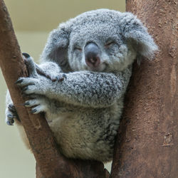 夏休みに子どもと行きたい関西の動物園。親子でいっしょに休日を満喫しよう