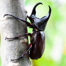 カブトムシの成虫の寿命と子どもへの伝え方。ママたちが感じた寿命の兆候など