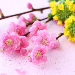 ひな祭りに花を飾ろう。飾り方やアレンジのポイントなど