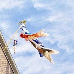 マンション用の鯉のぼり。選び方のポイントや子どもと楽しむ飾り方
