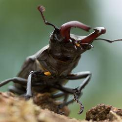 クワガタの幼虫や成虫の育て方について。季節にあわせたポイントとは
