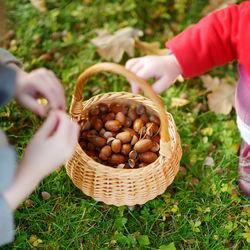 子どもとのピクニックは何をする?秋ならではの楽しみ方をご紹介