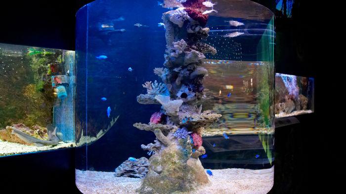 関西 水族館
