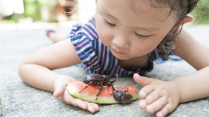 幼虫 方 カブトムシ 育て