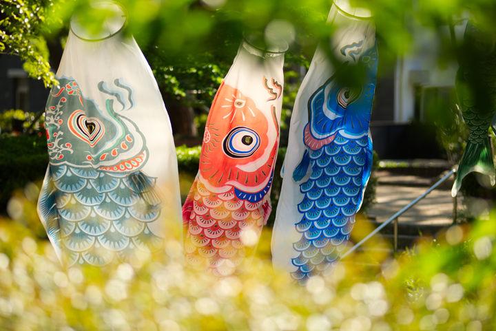 庭に飾られた鯉のぼり