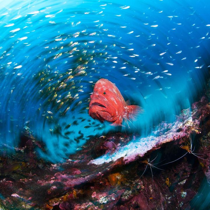 「海から見たニッポン」をテーマとした2つの写真展が同時開催
