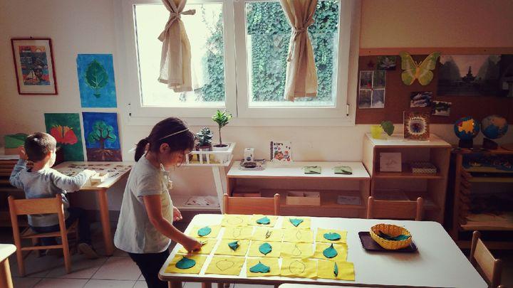 植物の葉の形を比べる4歳の子ども。(提供:マリアーニ・綿貫愛香さん)