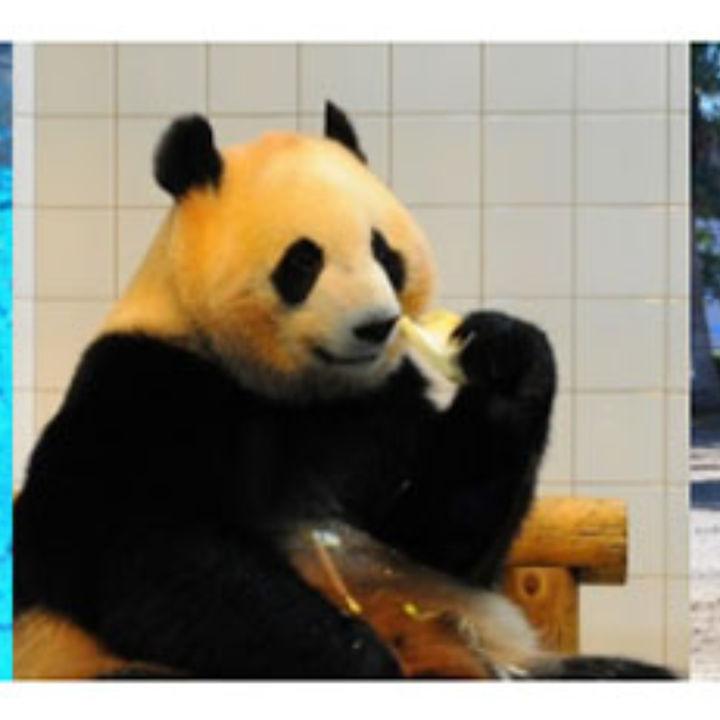 動物たちと至近距離で楽しめる新体験オンラインツアーが開催