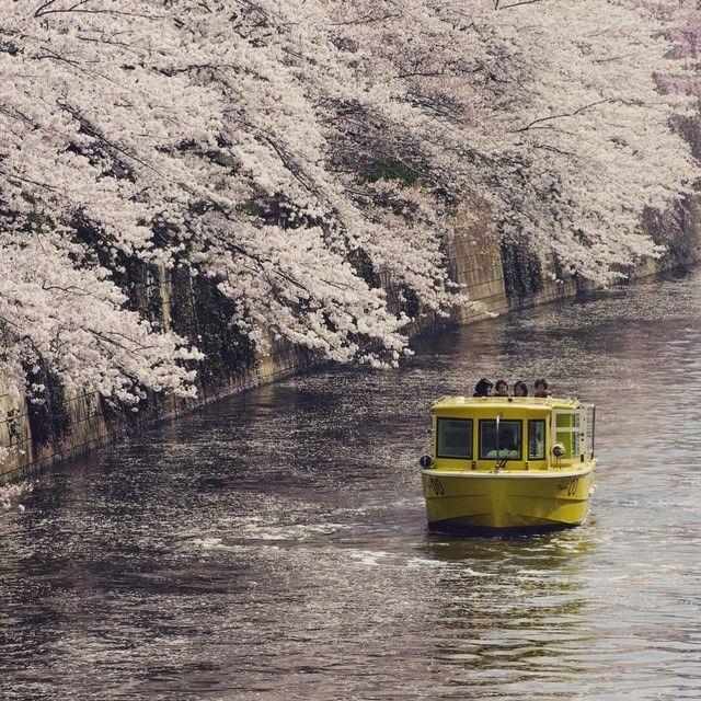 目黒川/月島川 お花見クルーズ付き宿泊プラン