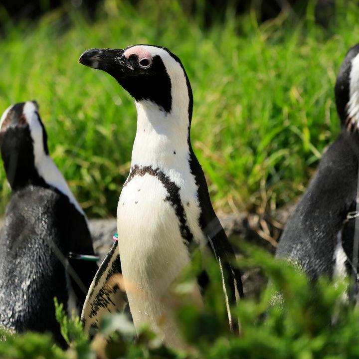 サンシャイン水族館がペンギン・カワウソについて学べるイベントを開催