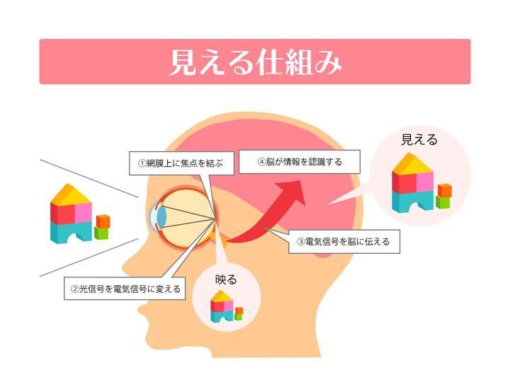 「お子さんが手遅れになる前に!子どもが3歳児までに視力検査を受ける重要性」(https://www.aigan.co.jp/aigan_style/column/30)より(監修:高橋ひとみ先生)