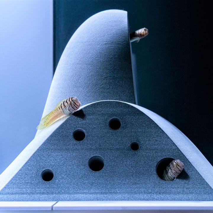 京都水族館がすみだ水族館で好評の展示「カタチとくらし」を初開催